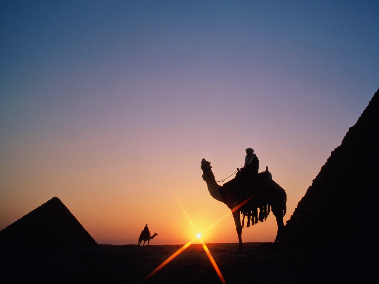 Camel Background