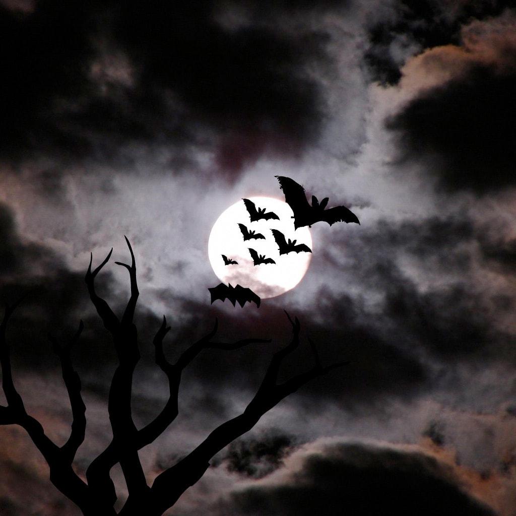 Bat HD pics
