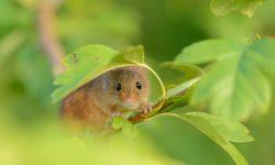 Mouse HD pics