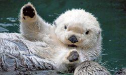 Otter HD pics