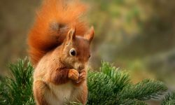 Squirrel HD pics