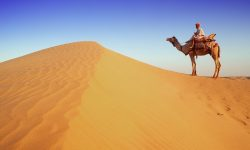 Camel HD pictures