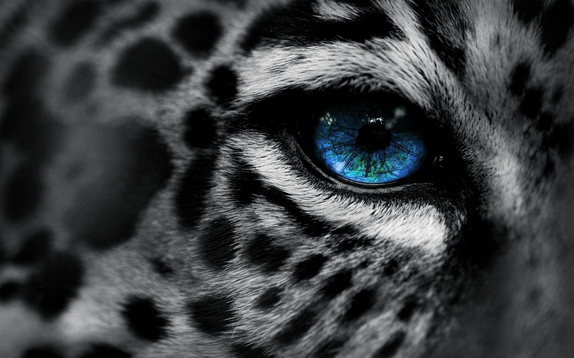Leopard HD pictures