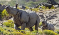Rhinoceros HD pictures