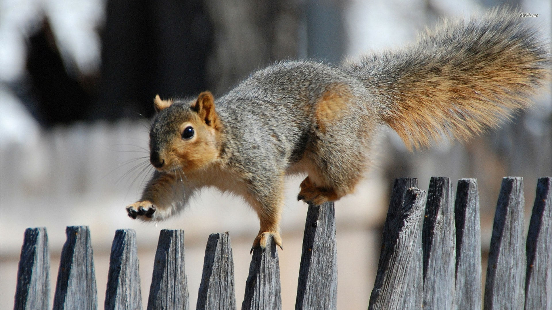 Squirrel HD pictures
