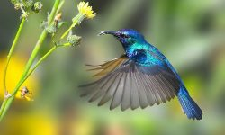 Colibri Desktop wallpaper