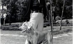 Grace Kelly Desktop wallpaper