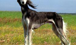 Greyhound Download