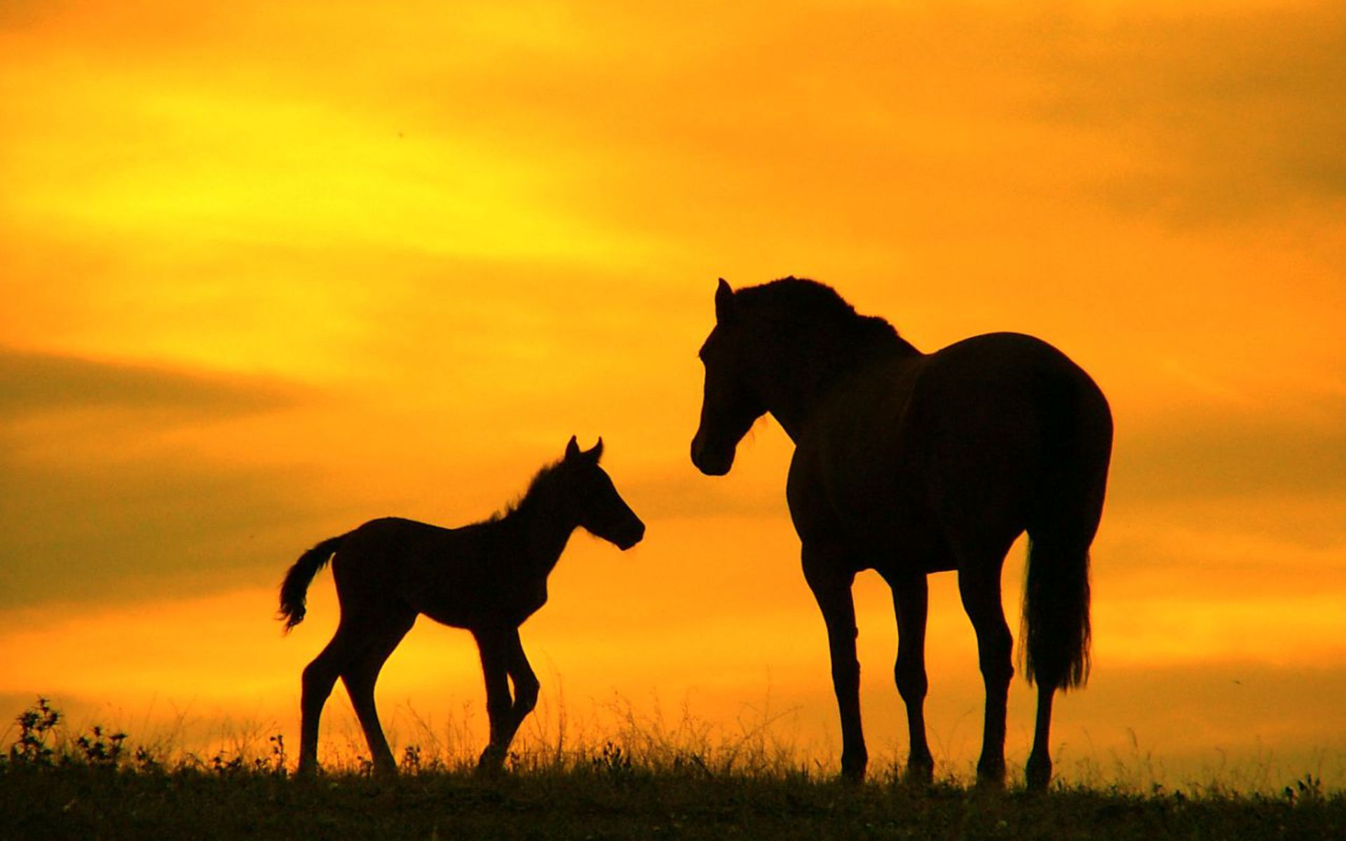 Horse Desktop wallpaper