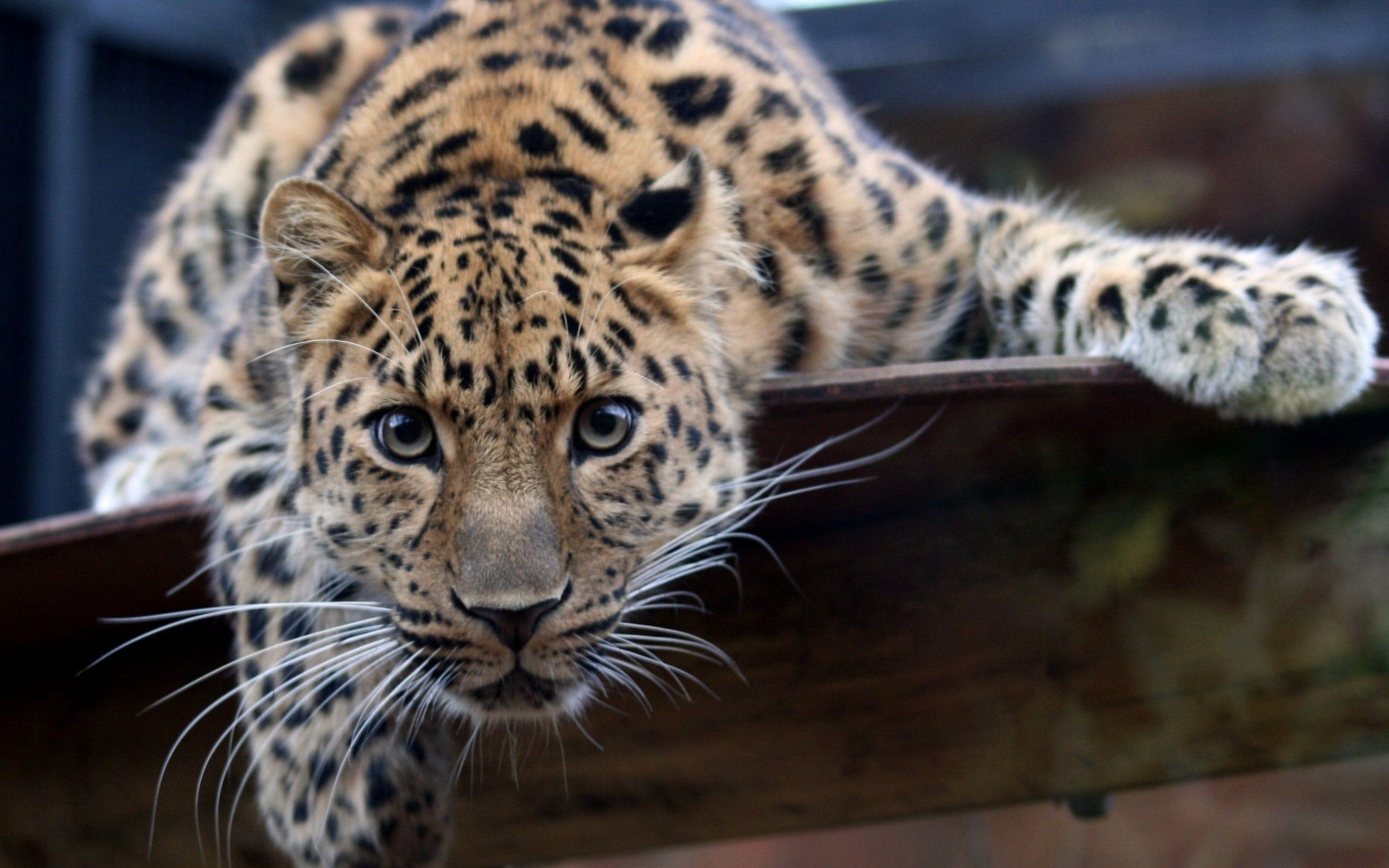 Jaguar for mobile