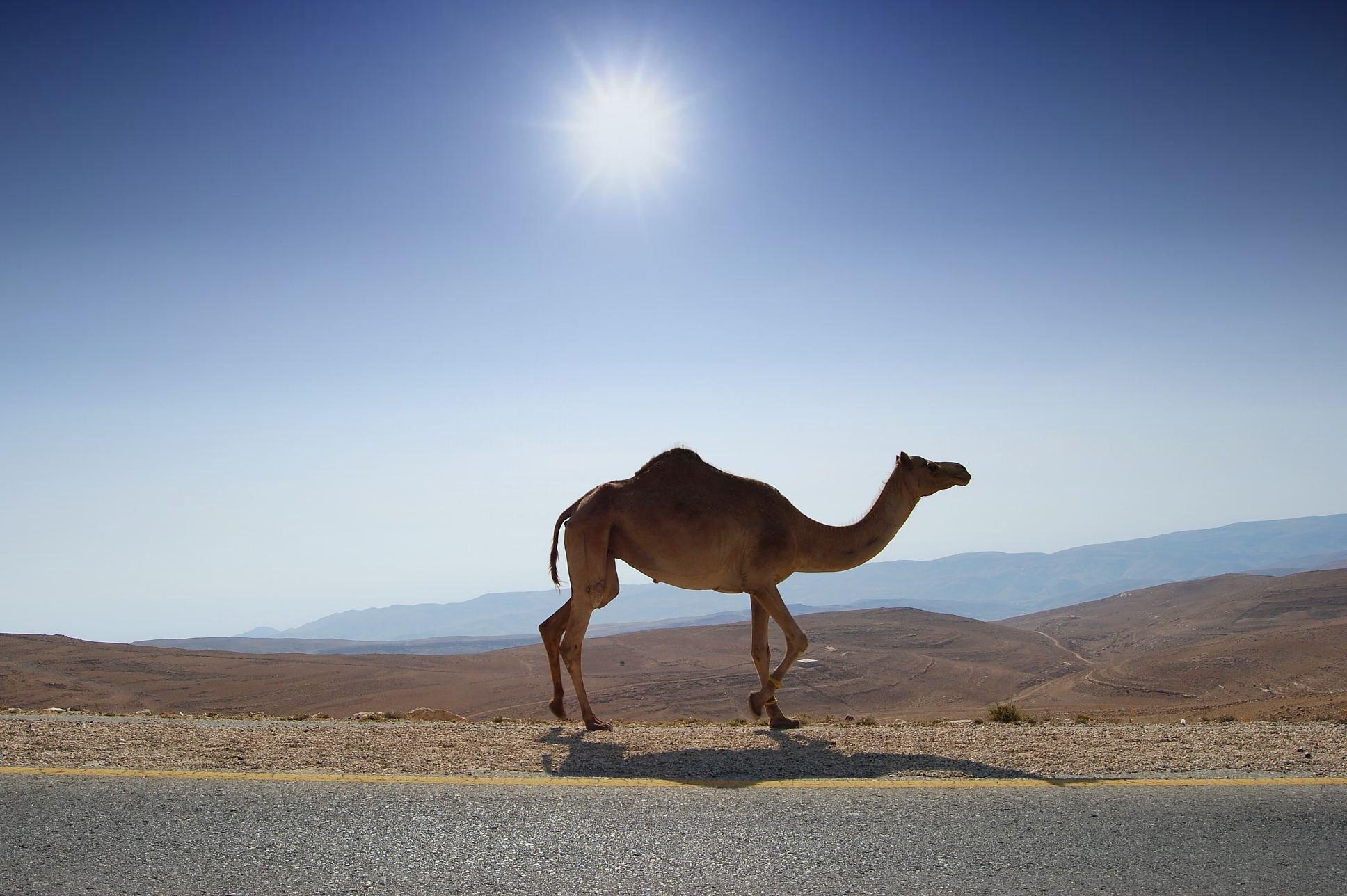 Camel Walls