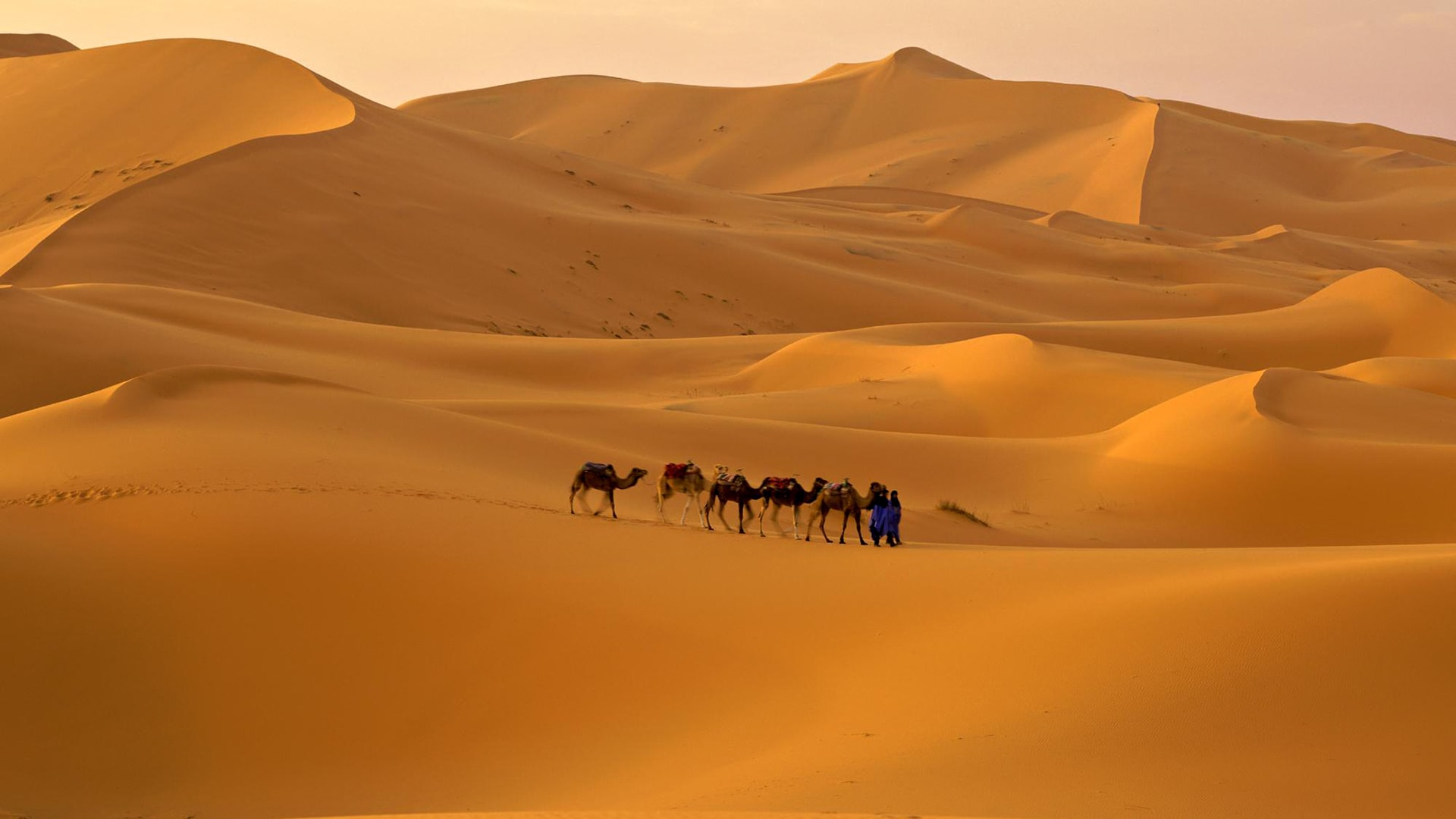 Camel Top