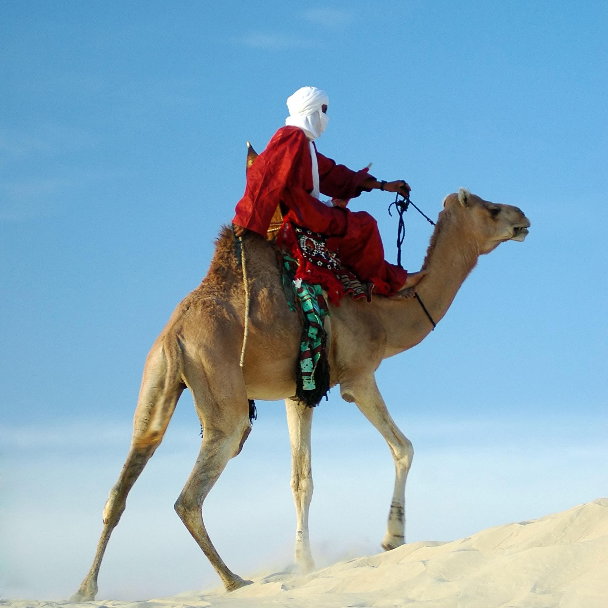 Camel New