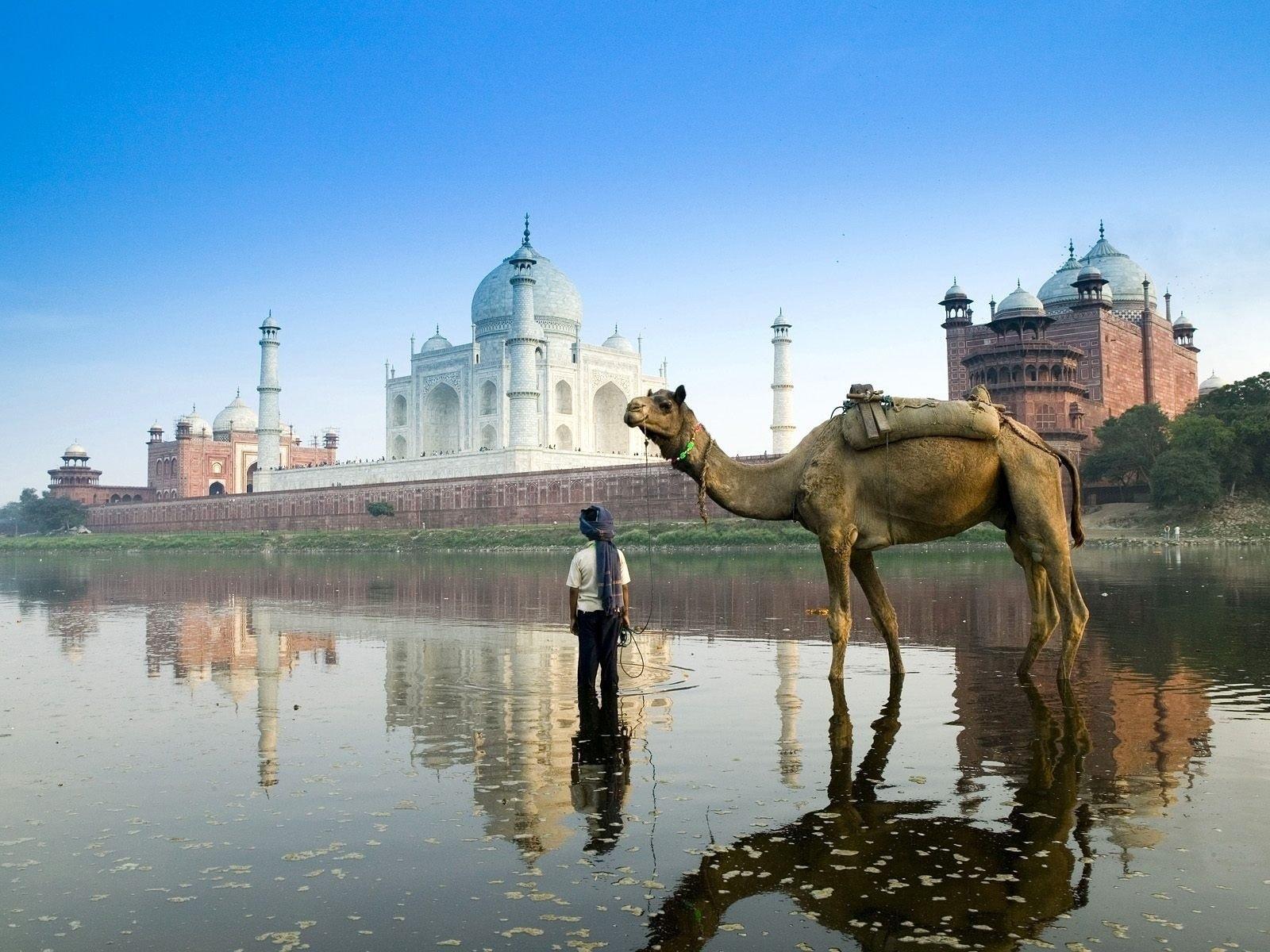 Camel Quality desktop