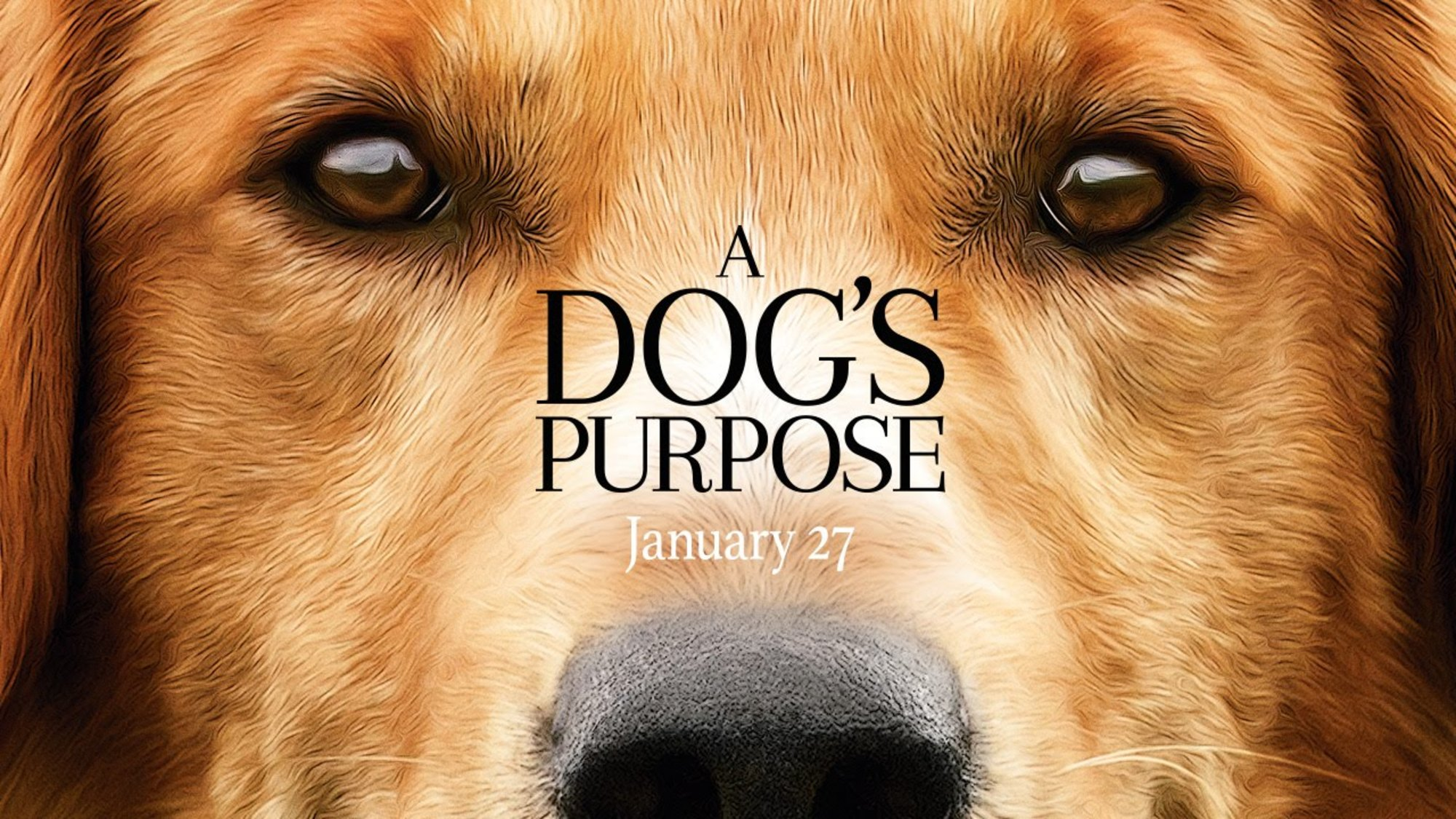 A Dog's Purpose widescreen wallpapers