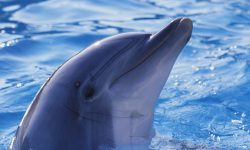 Bottlenose dolphins widescreen wallpapers