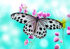 Butterfly widescreen wallpapers