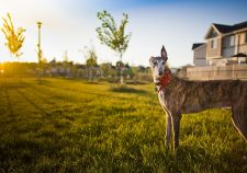Greyhound widescreen wallpapers