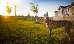 Greyhound widescreen wallpapers