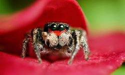 Jumping spider widescreen wallpapers