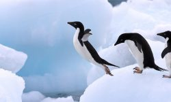Penguin widescreen wallpapers