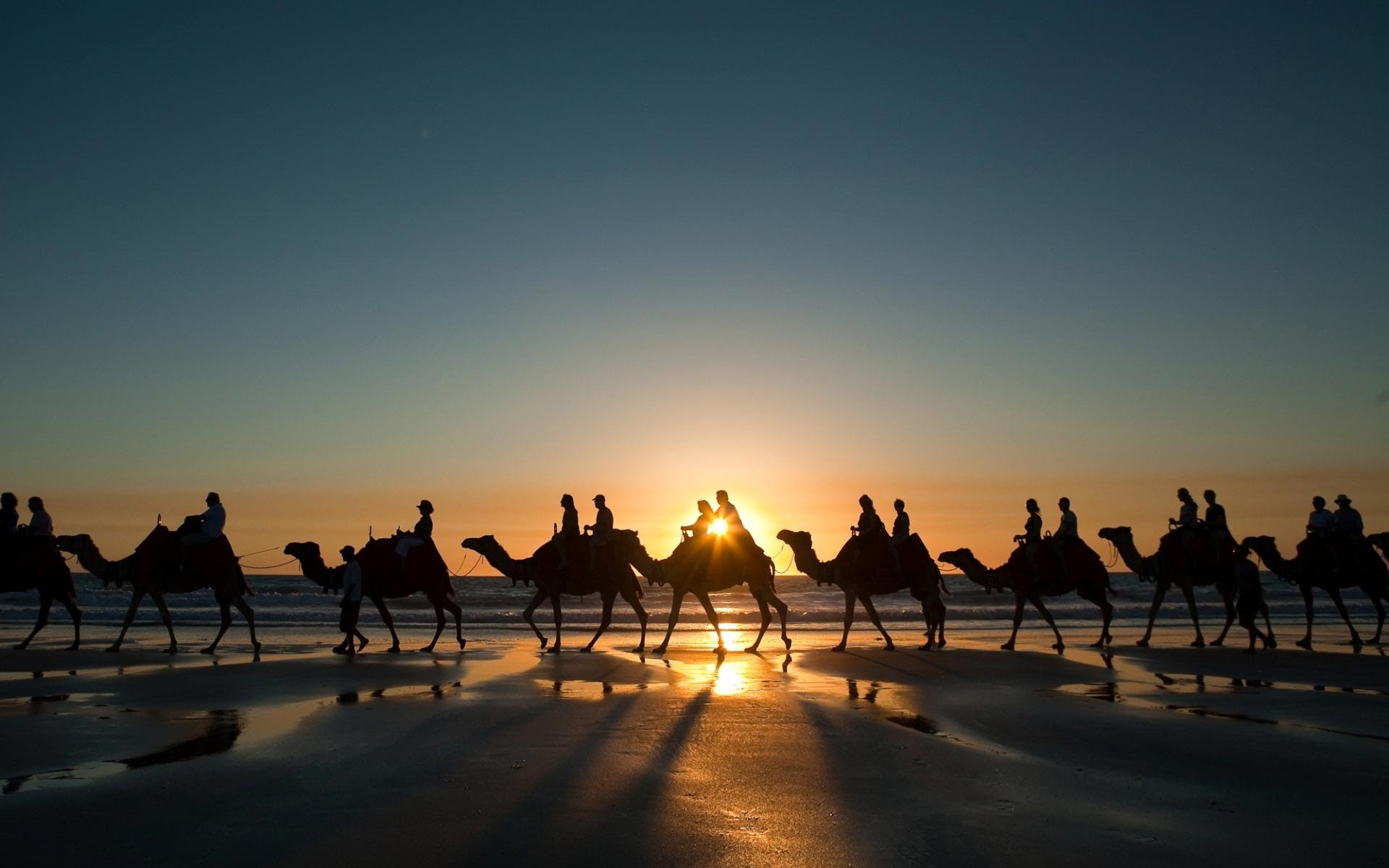 Camel PC wallpapers