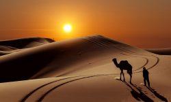 Camel Exitoc