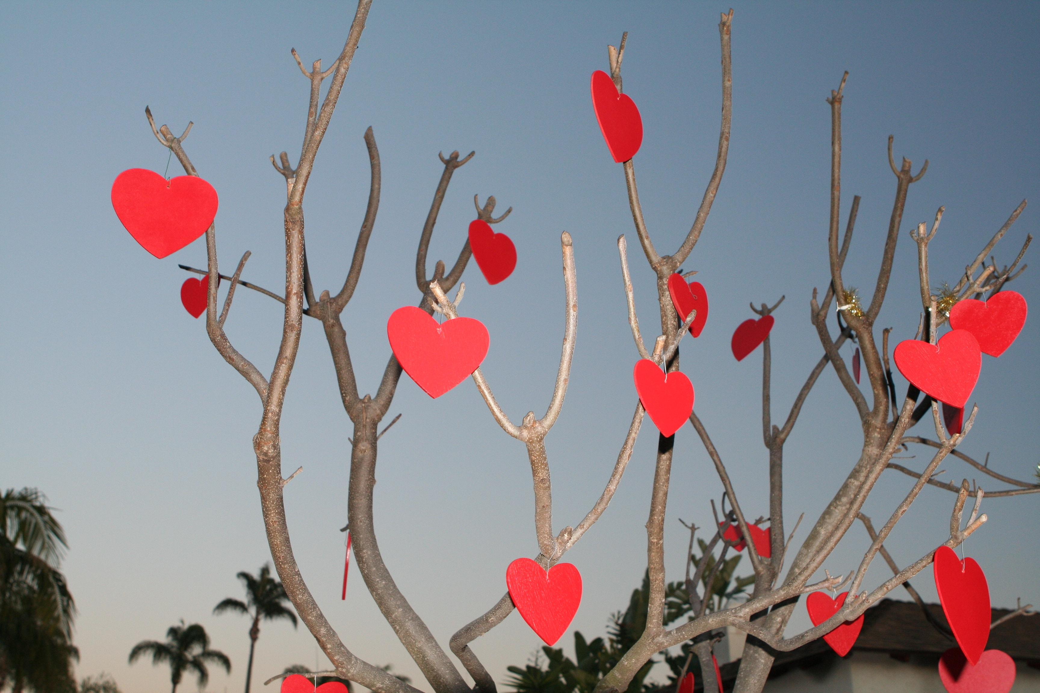 Valentine's Day New