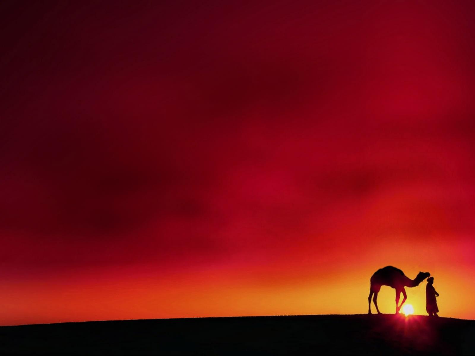 Camel Funny
