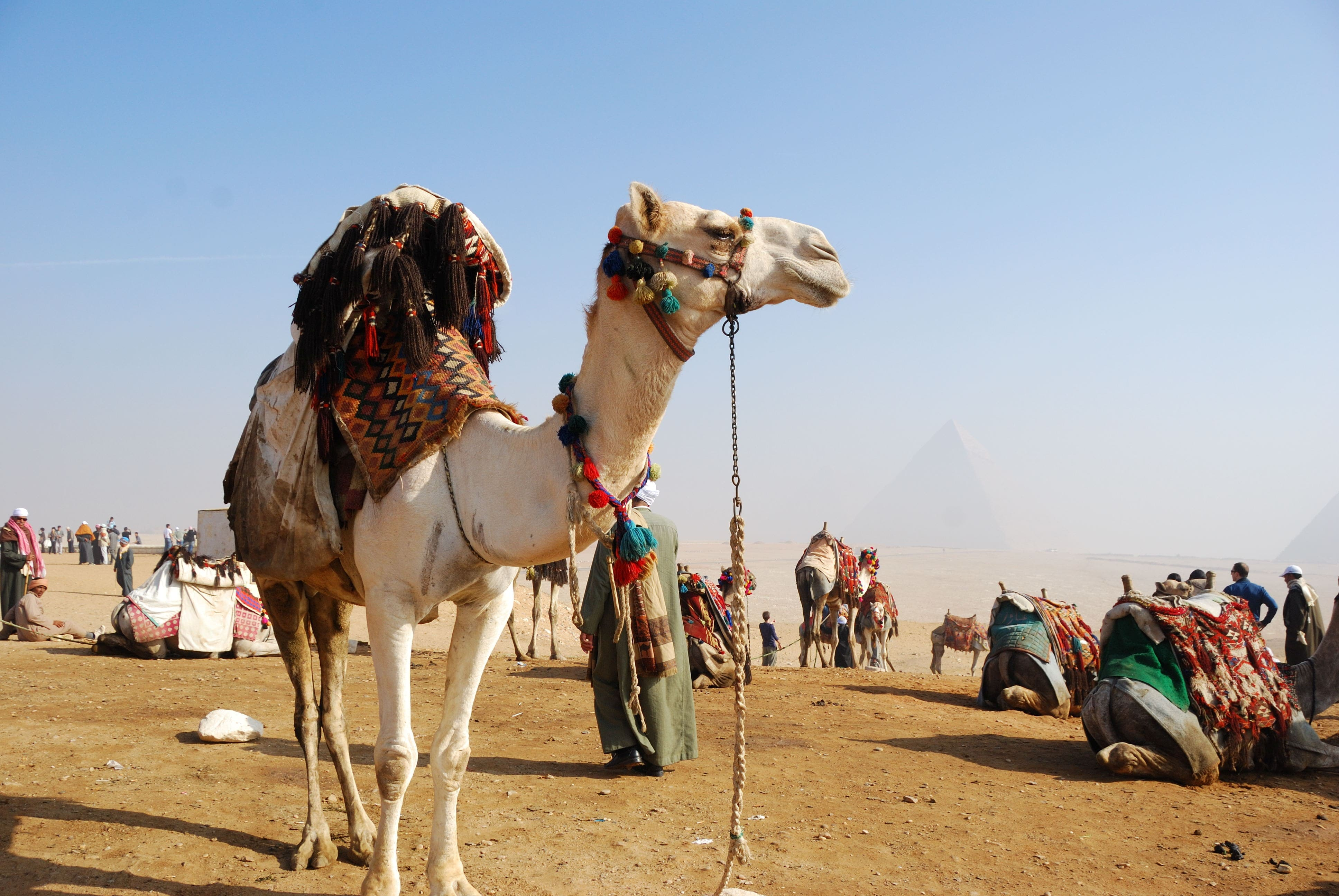 Camel High