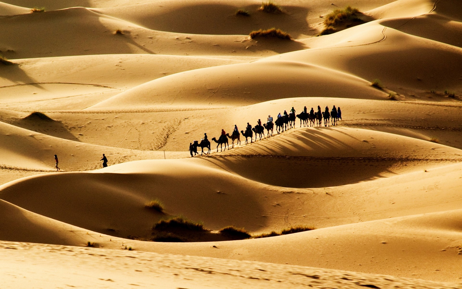 Camel Glamour