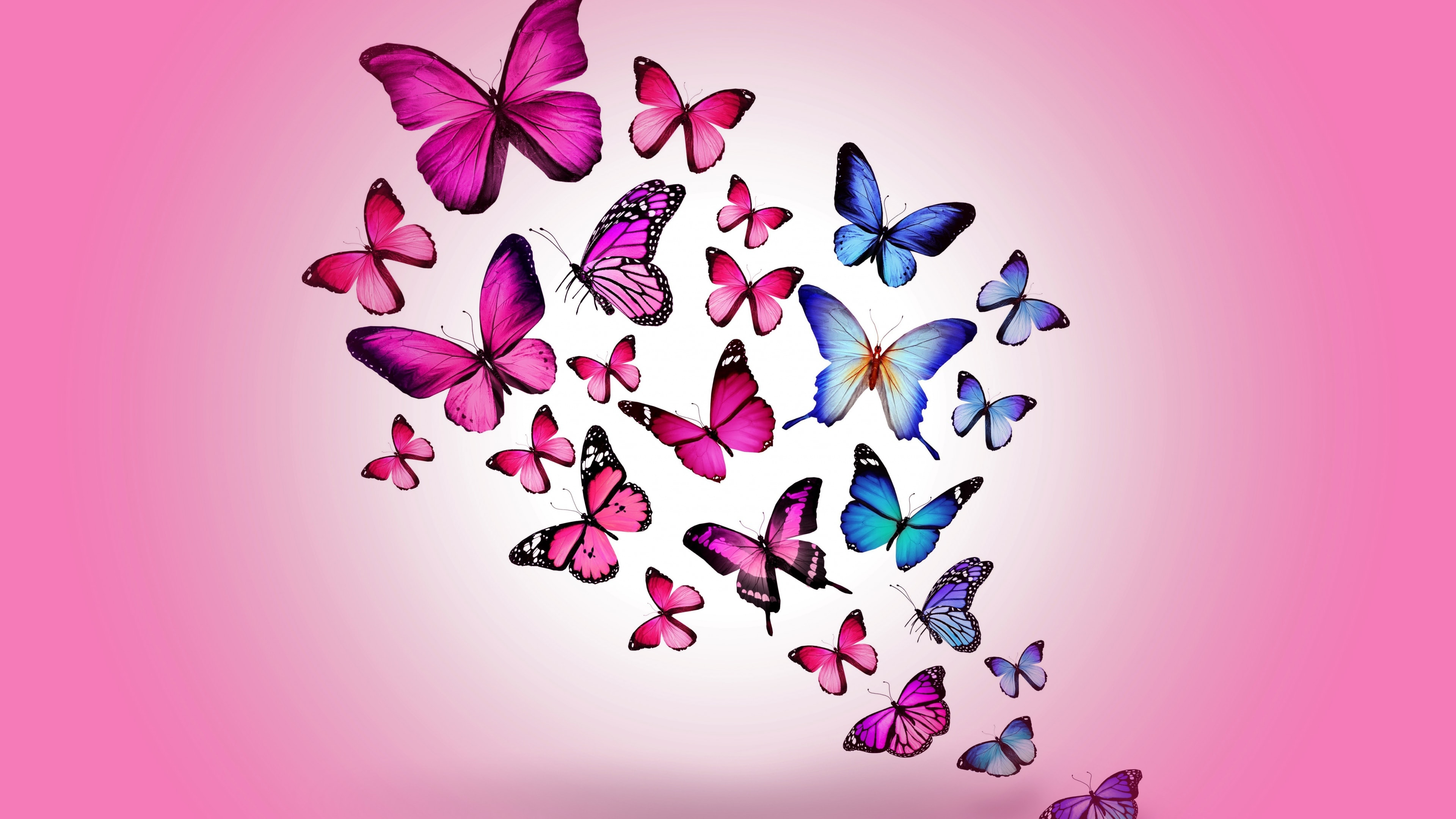 Butterfly Pictures