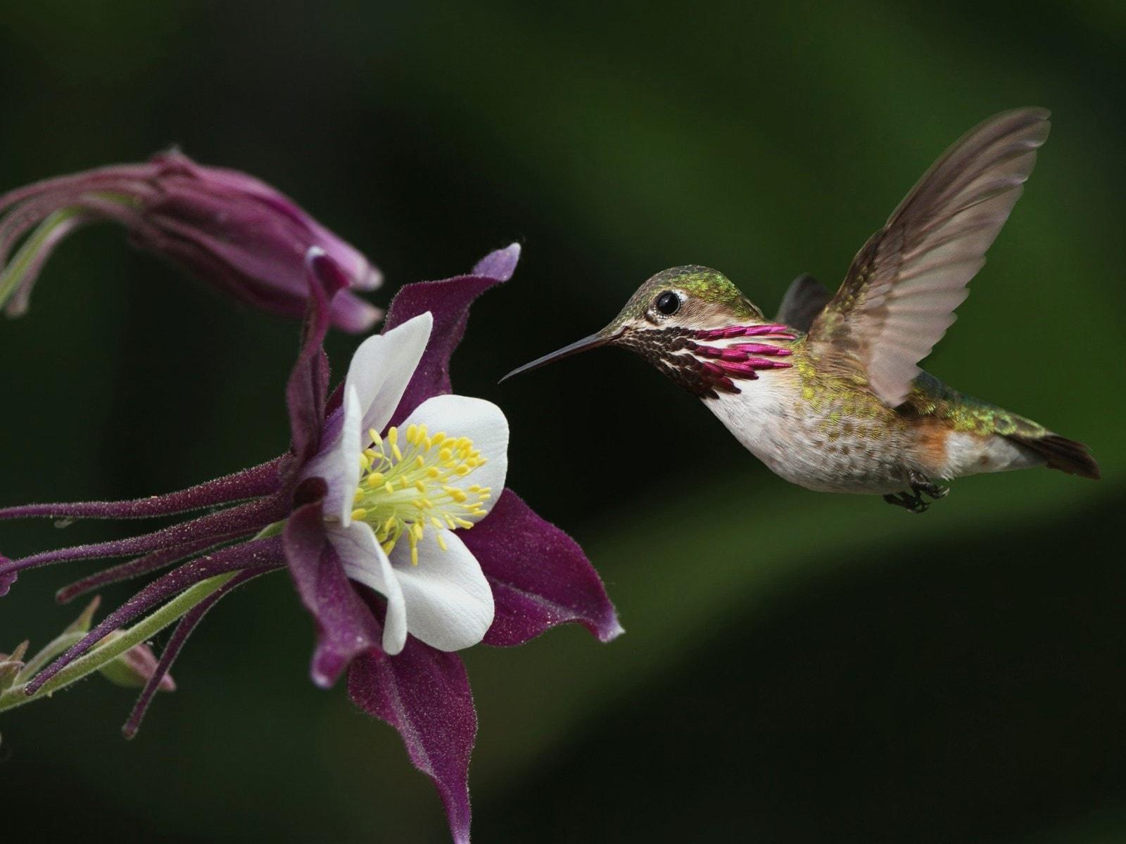 Colibri Pictures