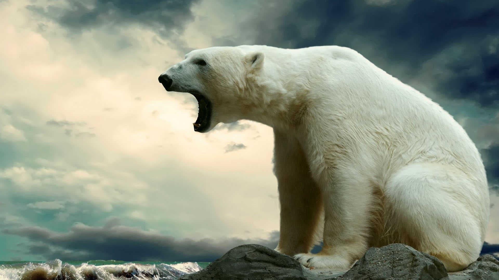 Bear desktop wallpaper
