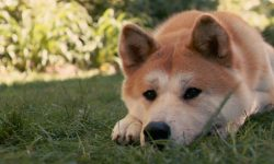 Akita Inu HQ wallpapers