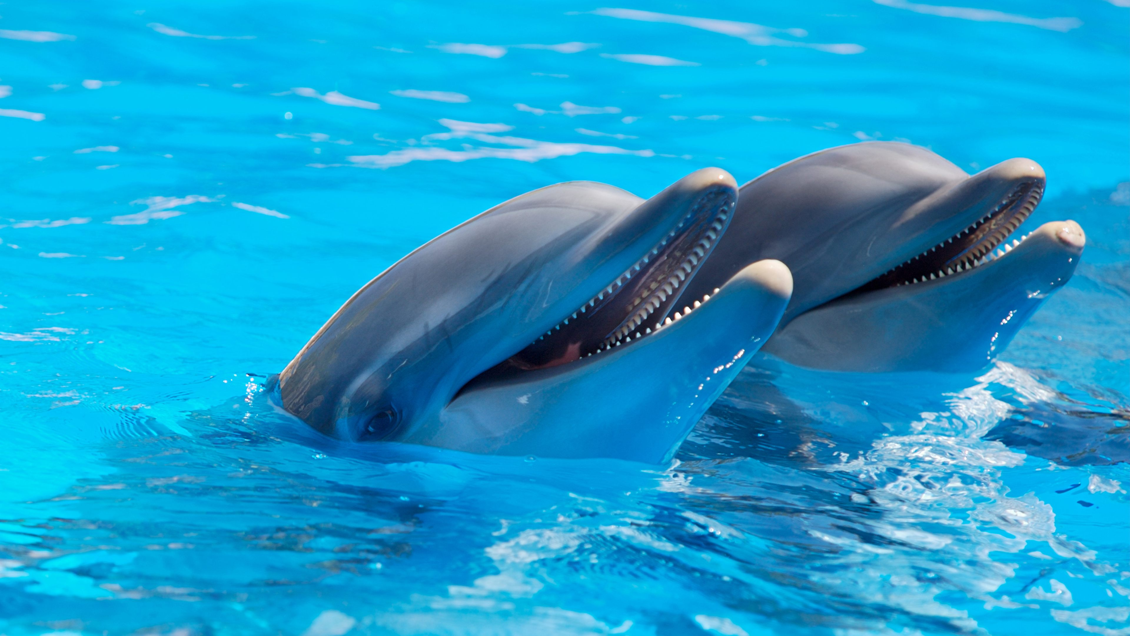 Bottlenose dolphins HQ wallpapers