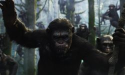 Dawn of the Planet of the Apes HQ wallpapers