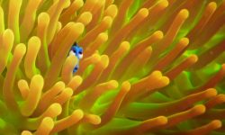 Finding Dory HQ wallpapers