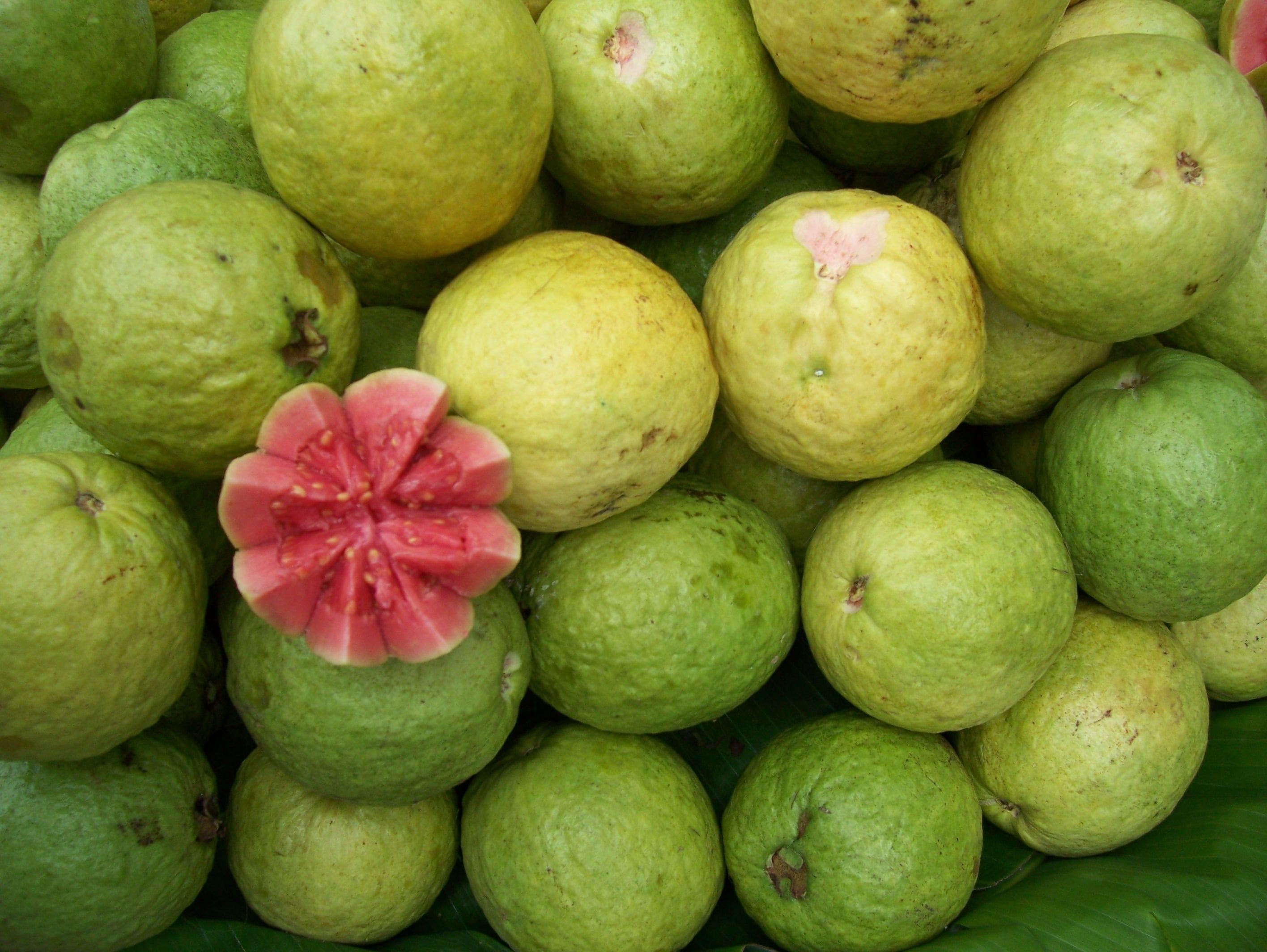 Guava HD pics