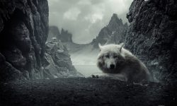 Wolf Backgrounds