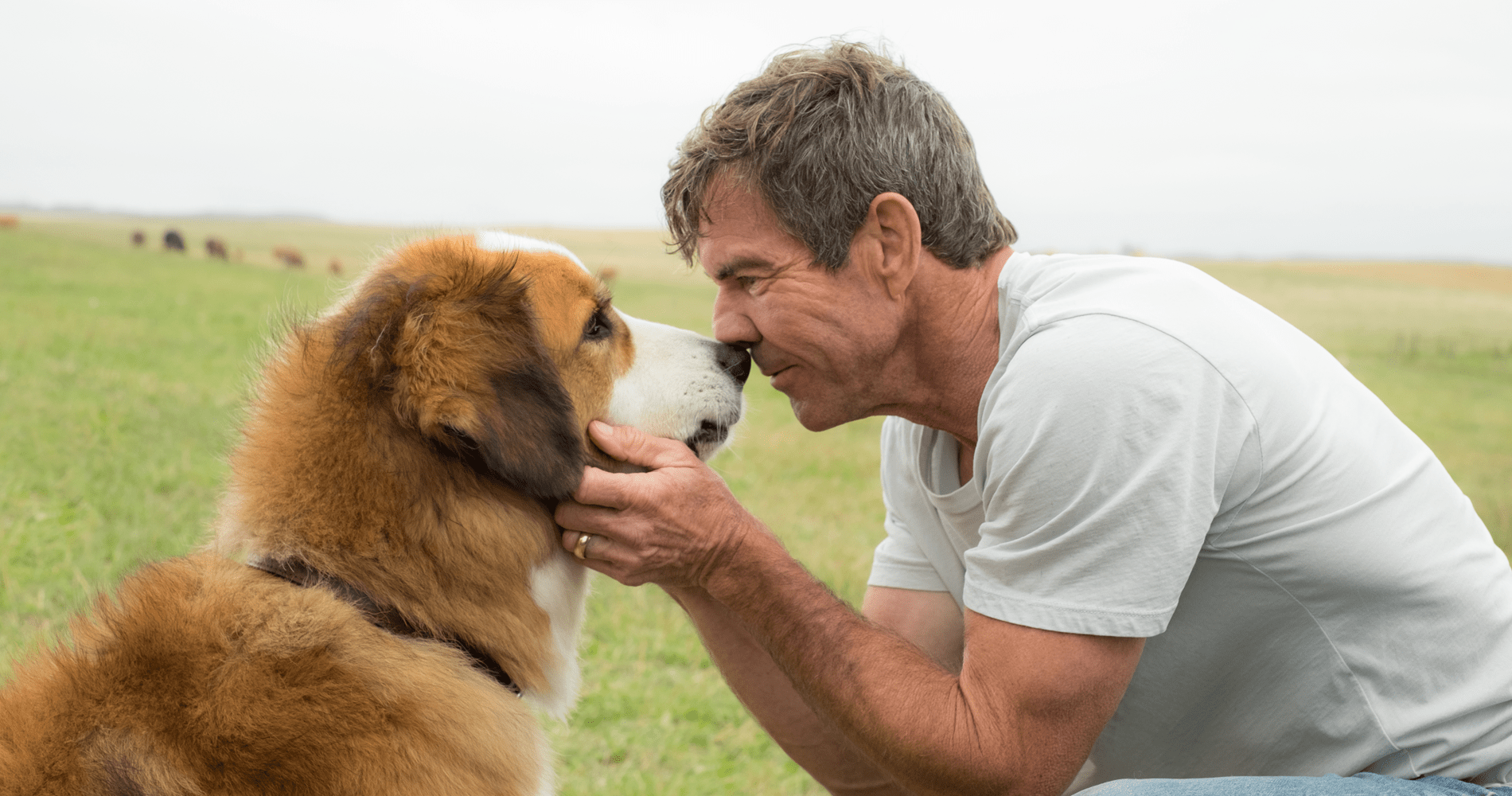 A Dog's Purpose Background