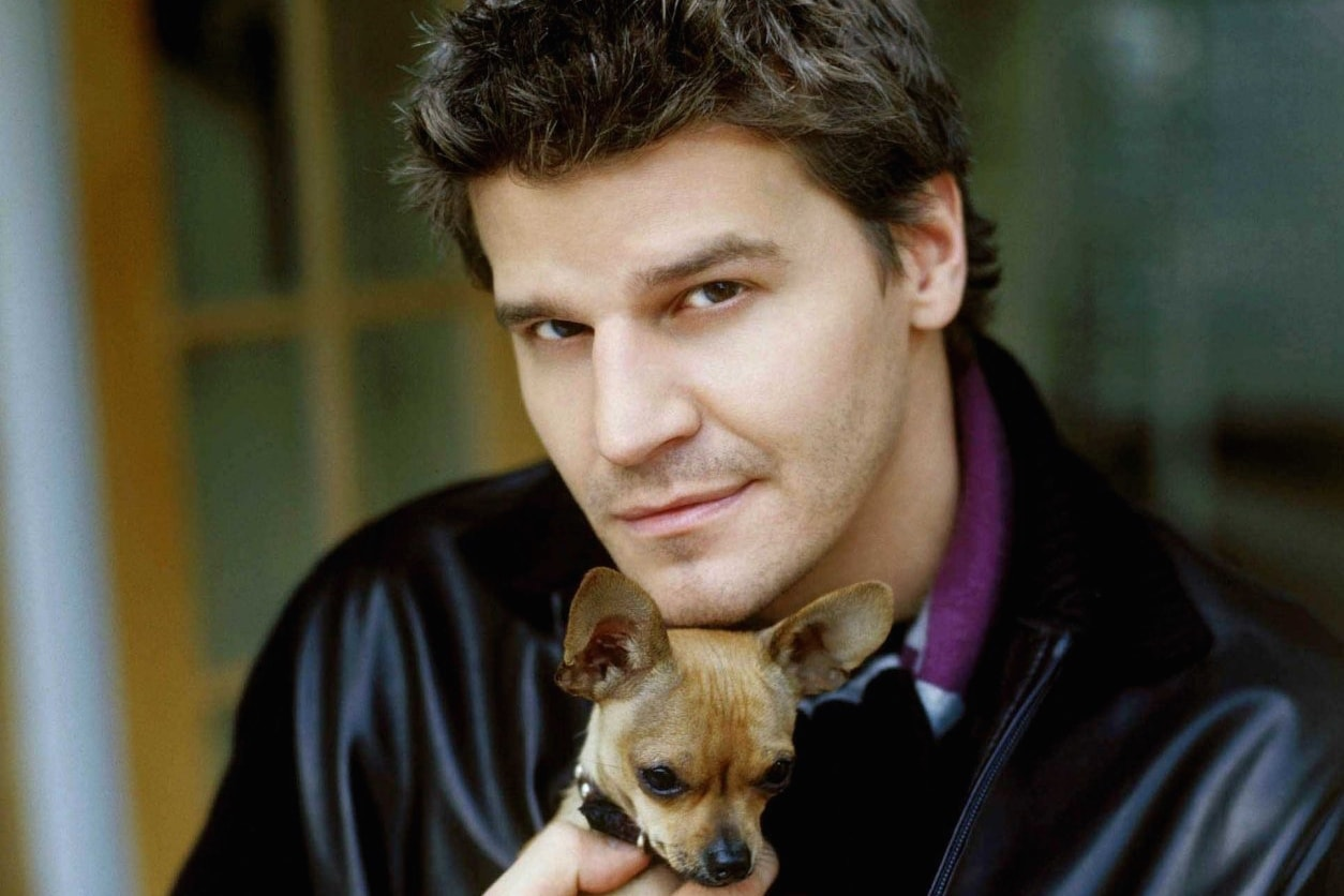 David Boreanaz Screensavers