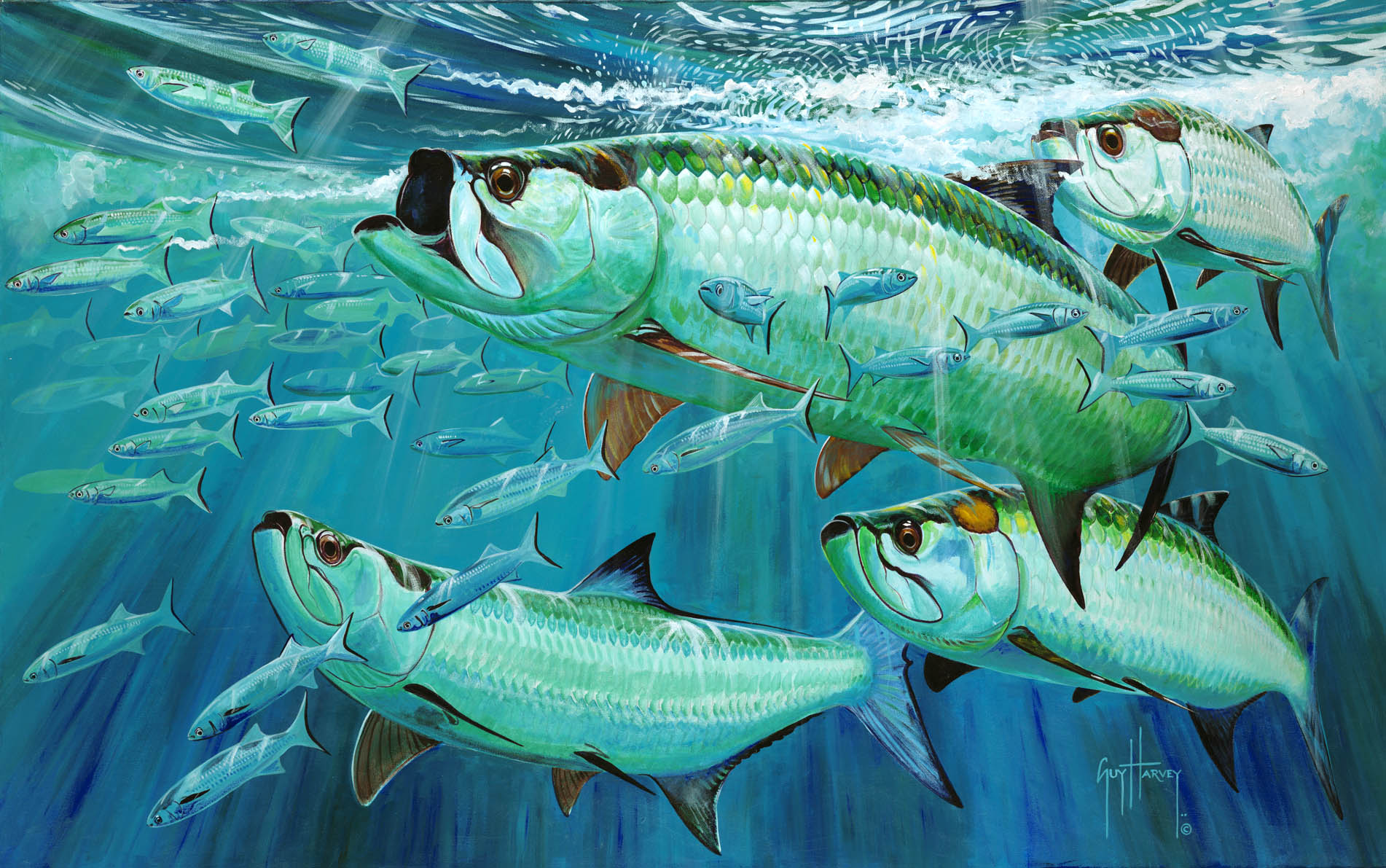 Fighting tarpon Background