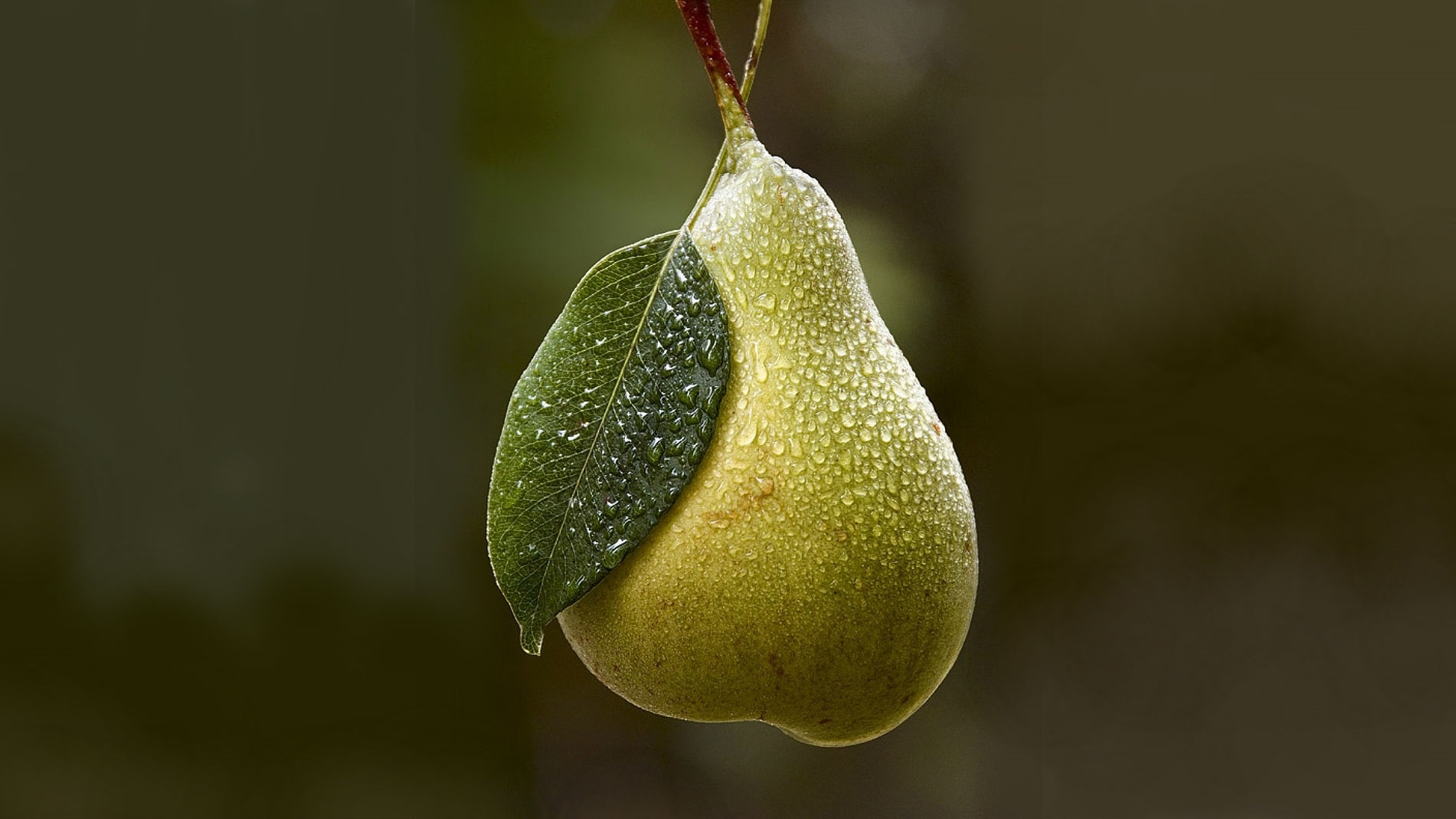 Pear Desktop wallpapers