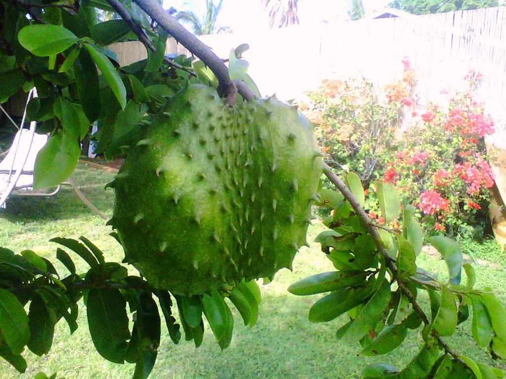 Soursop Desktop wallpapers