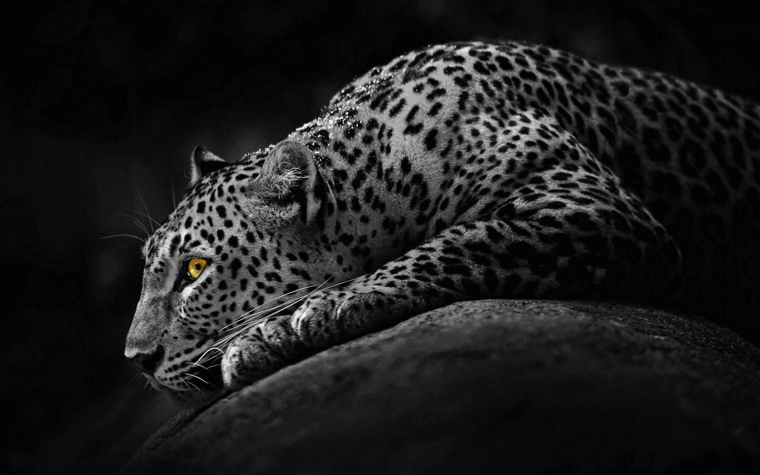 Jaguar HD pictures