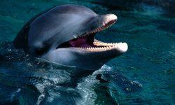 Bottlenose dolphins Background