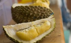 Durian Background