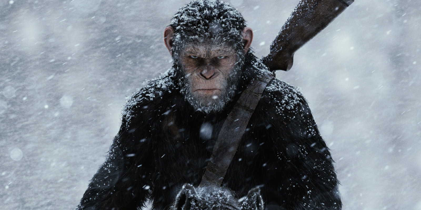 War for the Planet of the Apes Screensavers