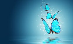 Butterfly HD pics